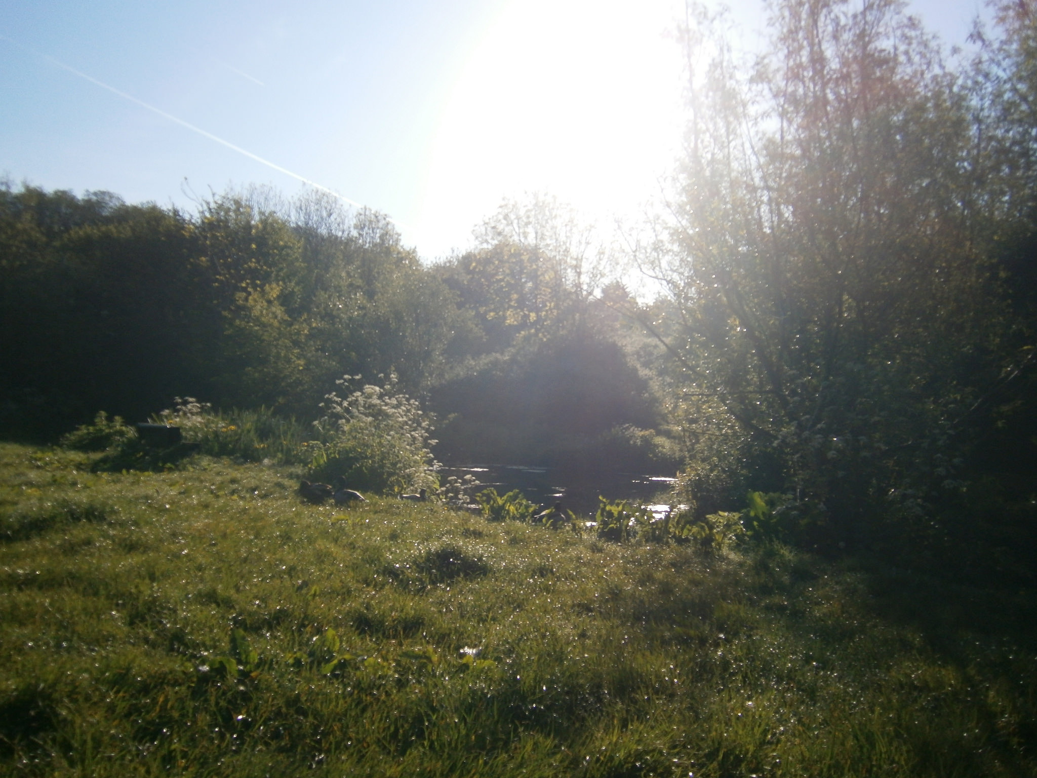 Conserving Lower Severn Vale Levels
