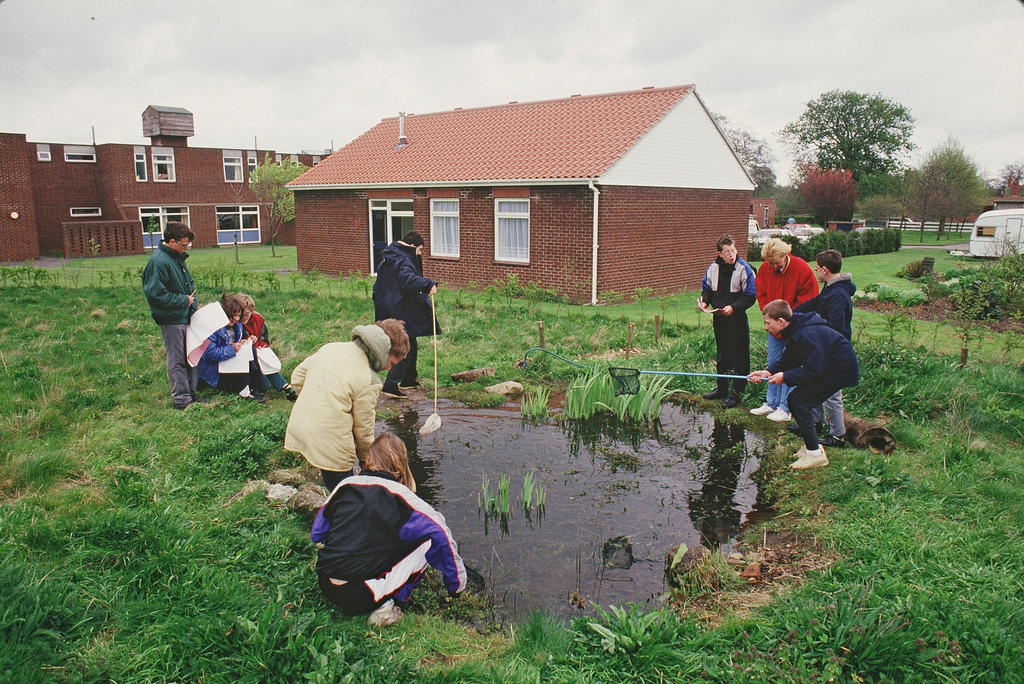 Creating ponds for great crested newts