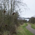 Lamplighter's Marsh