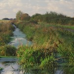 Huntspill River water vole habitat