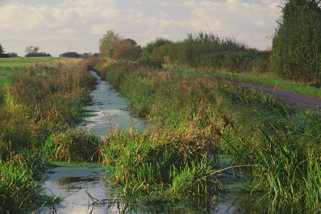 Huntspill River water vole habitat