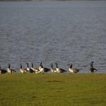 Birdwatching on River Severn