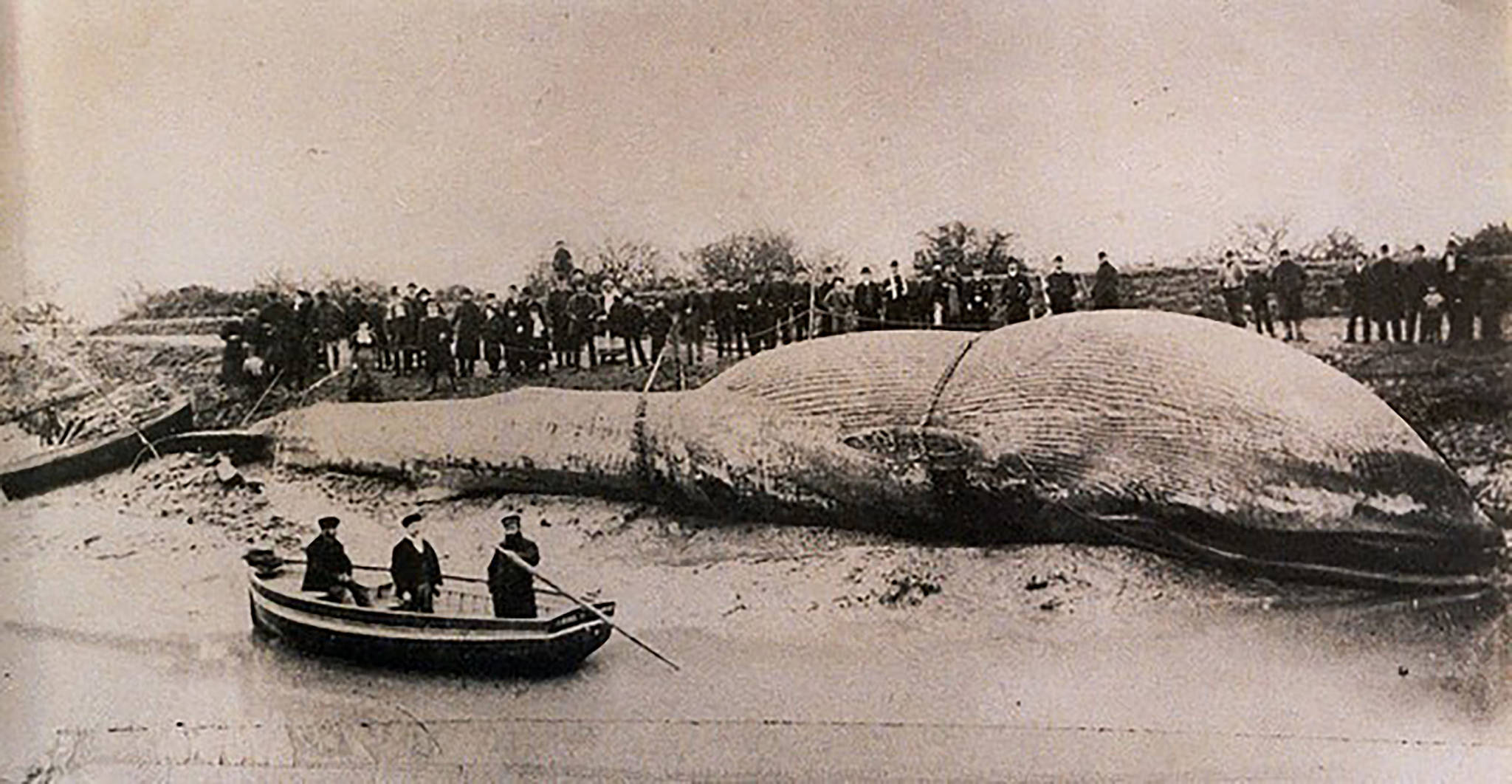 The Littleton Whale