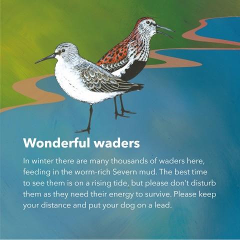 Help roosting birds