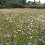 Restoring species rich meadows