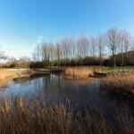 Habitats for water voles